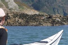 Wildlife on South Devon Coast