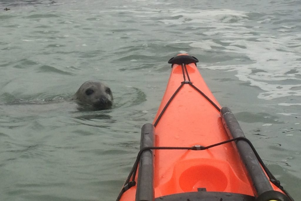 spotting wildlife on Sea kayaking holiday for couples in Devon